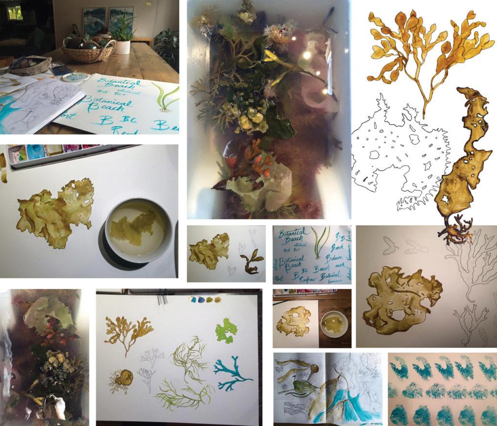 seaweed exploration inspiration