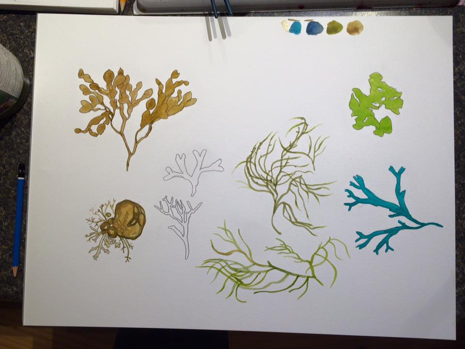 seaweed watercolor illustrations